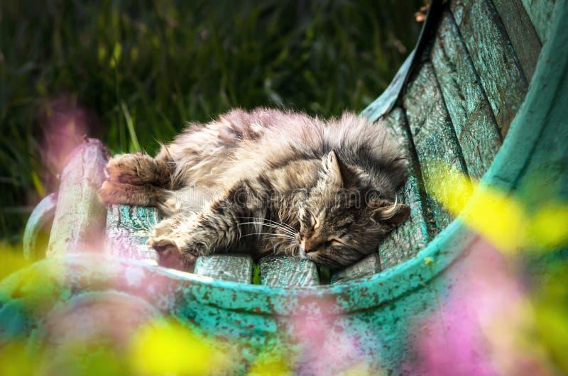 Katten ligger på en sjaskig bänk och sover mycket utmärkt nära de kulöra blommorna och gräsplanerna arkivbild