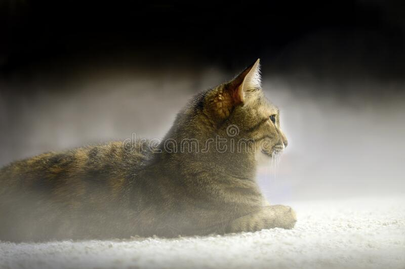Katten ligger på en vit yta i dimman arkivfoton