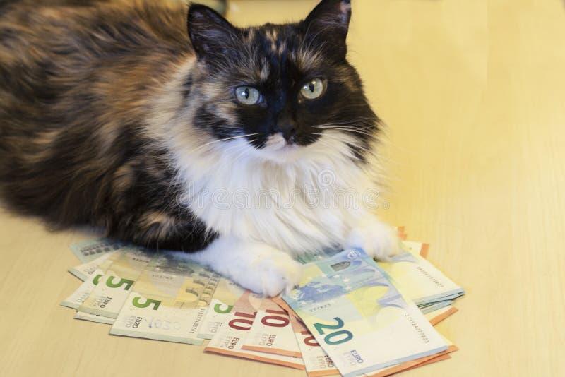 Katten ligger på pengarna royaltyfri bild
