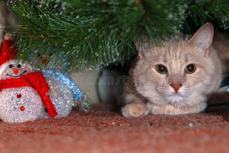 Katten möter nytt år och väntande på gåvor fotografering för bildbyråer
