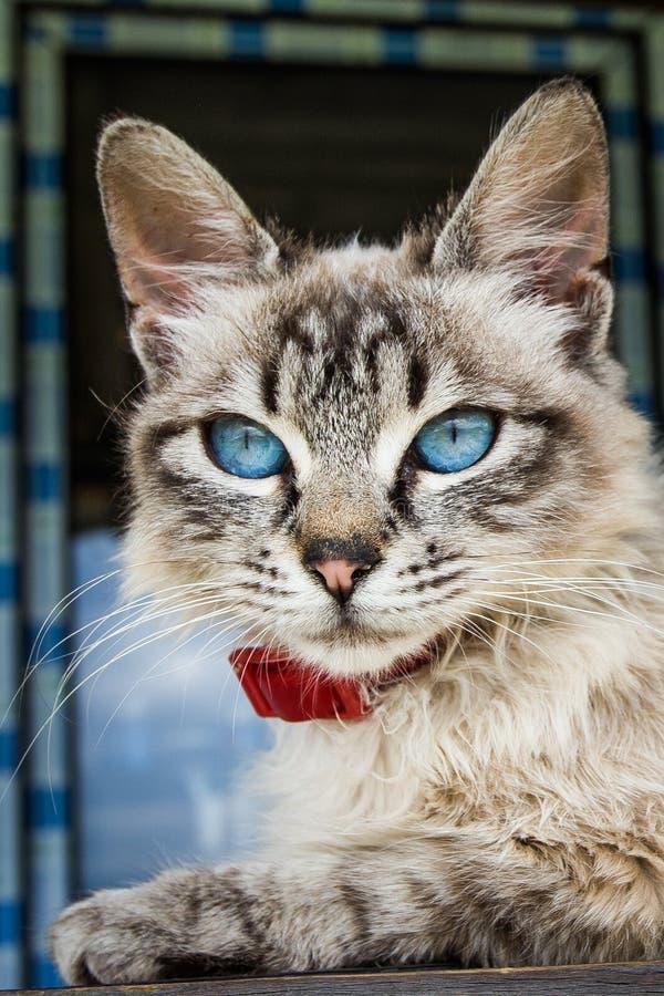 Katten med blått synar royaltyfri foto