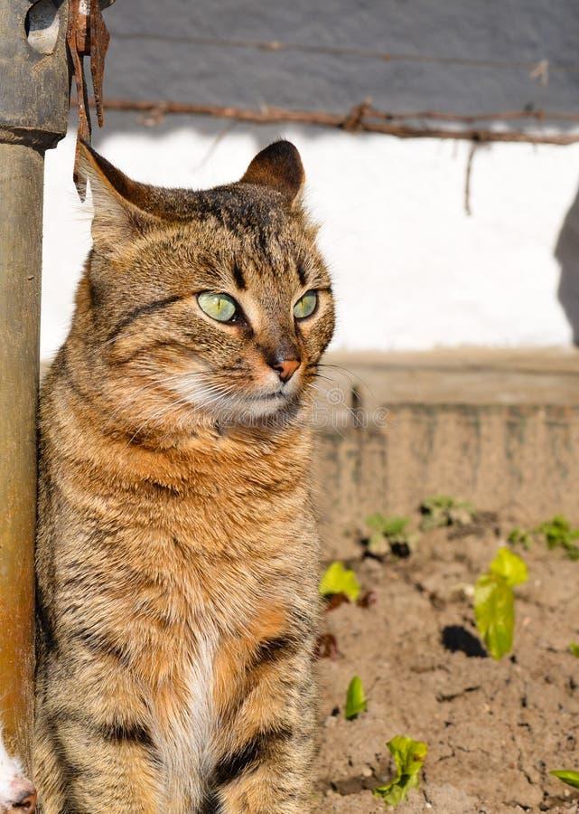 Katten med gräsplan synar royaltyfria bilder