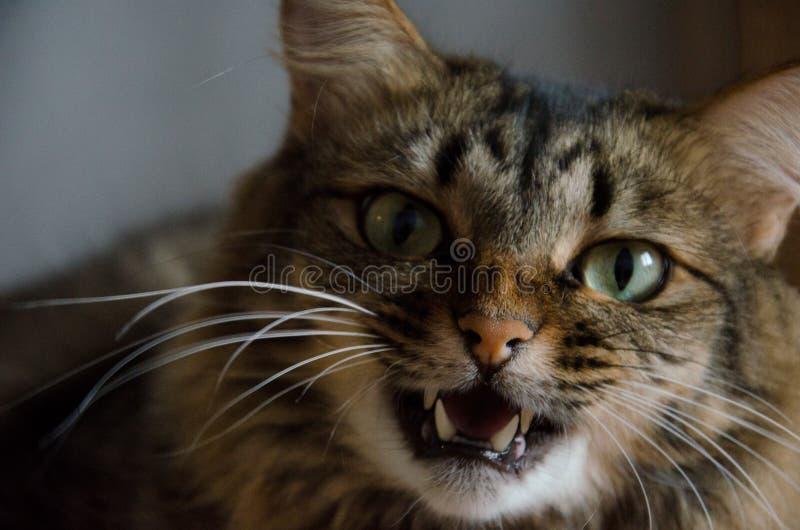 Katten med gräsplan synar arkivbild