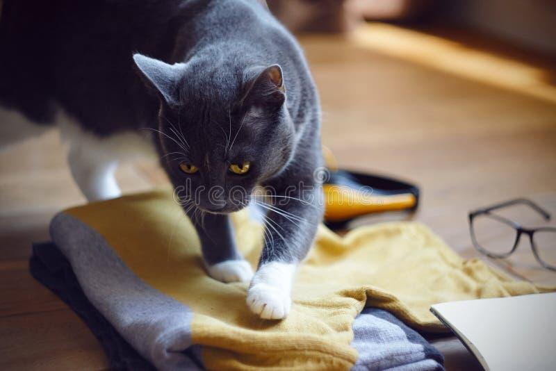 Katten med gula ögon sätter bekvämt bland saker som förbereds för turen royaltyfri fotografi