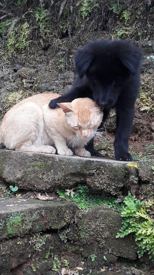 Katten och f?rf?ljer royaltyfri foto