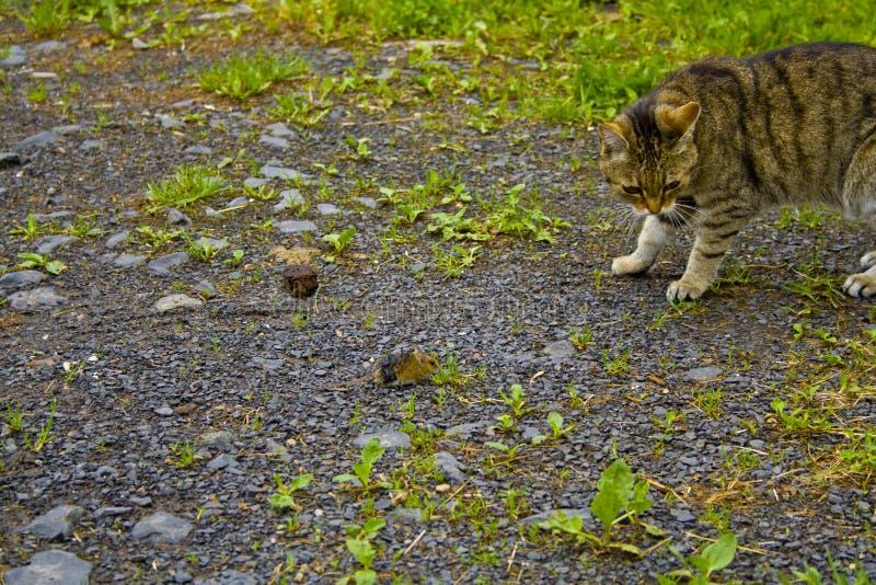 Katten och musen håller sig ögonen på fotografering för bildbyråer