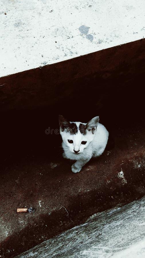 Katten op de goot stock afbeelding
