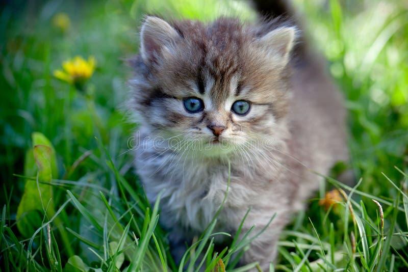 Katten op een gras royalty-vrije stock fotografie