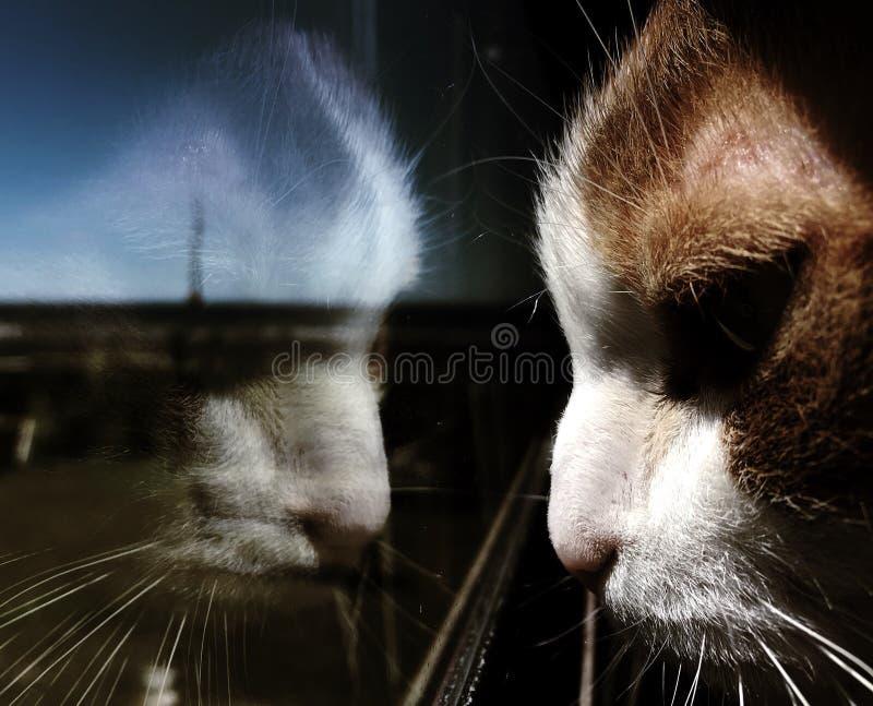 Katten på fönstret royaltyfria foton