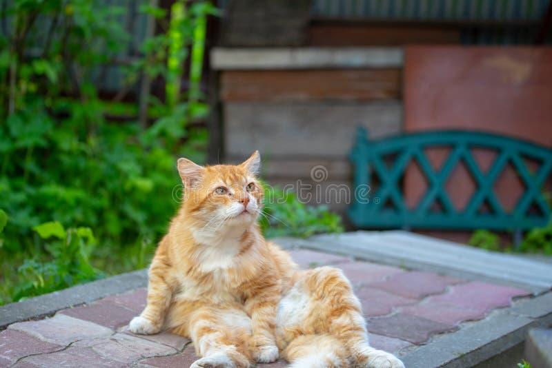 Katten p? gatan i ett roligt poserar och stirra in i avst?ndet arkivbilder