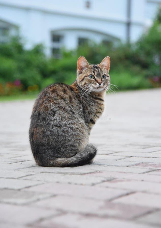 Katten på trottoaren royaltyfri foto