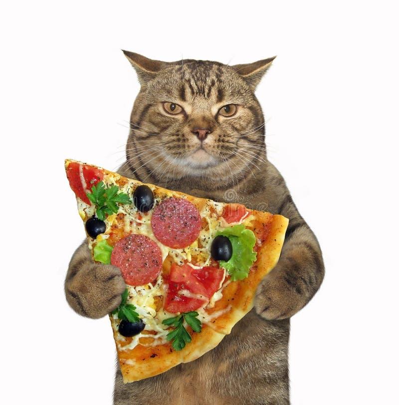 Katten rymmer stycket av pizza arkivfoto