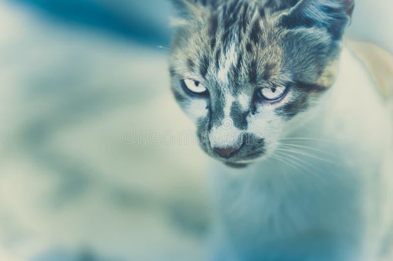 Download Katten` S Gezicht Voor De Camera Stock Afbeelding - Afbeelding bestaande uit up, katje: 107701237
