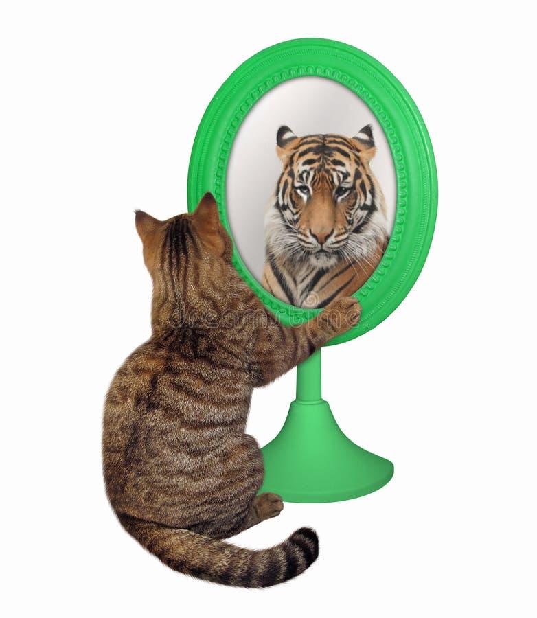 Katten ser dess reflexion 3 arkivfoton