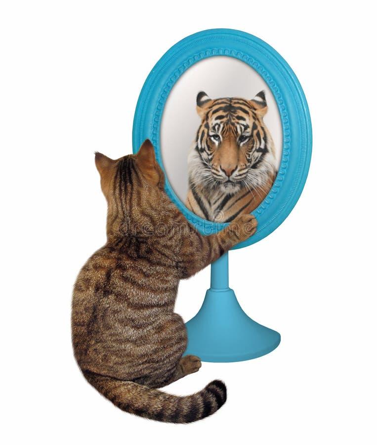 Katten ser dess reflexion 2 royaltyfri bild