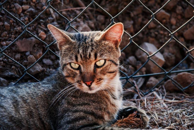 Katten ser förargad royaltyfri fotografi