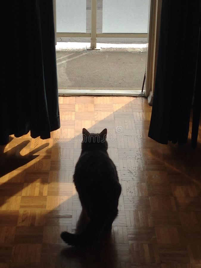 Katten ser ut dörren arkivfoton