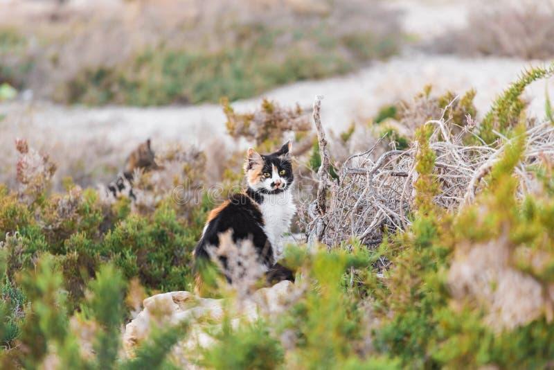 Katten ser ut för rov jakt royaltyfri bild