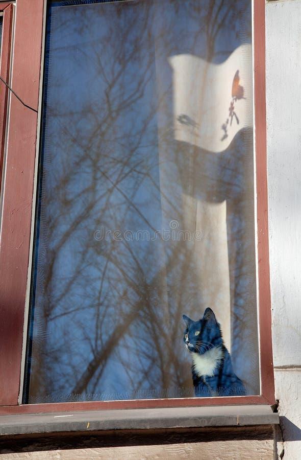 Katten ser ut ur ett stort fönster arkivbilder