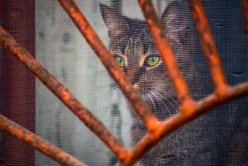 Katten ser ut ur metallfönsterskyddsgallret royaltyfria bilder