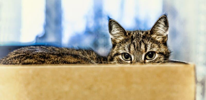 Katten sitter i en ask close upp fotografering för bildbyråer