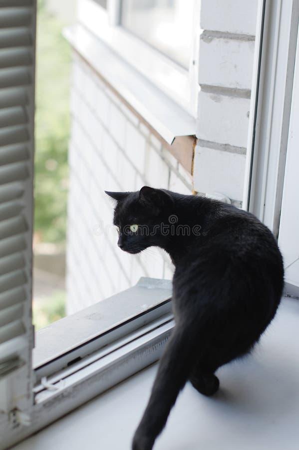 Katten sitter nära fönstret och ser ut gatan arkivbilder