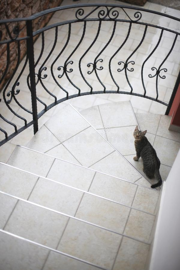 Katten sitter på den belade med tegel trappuppgången royaltyfria foton