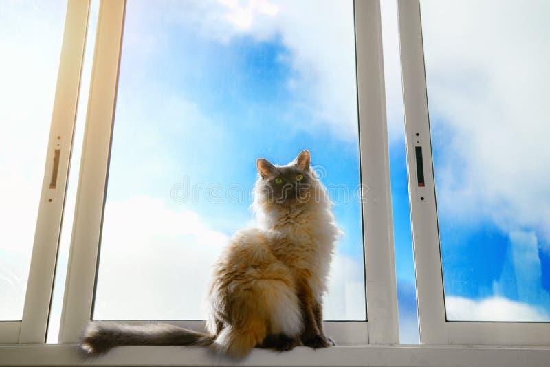 Katten sitter på fönsterbrädan royaltyfri fotografi