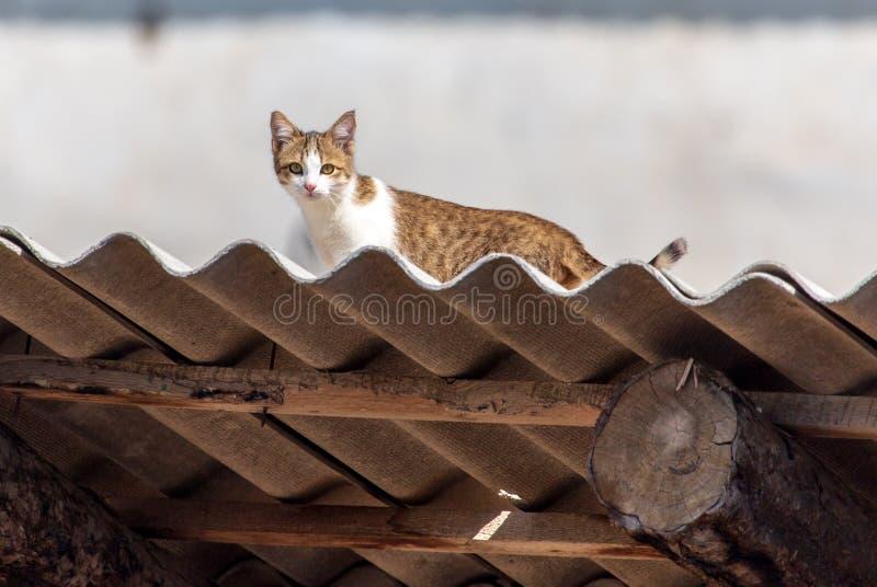 Katten sitter på taket av huset fotografering för bildbyråer
