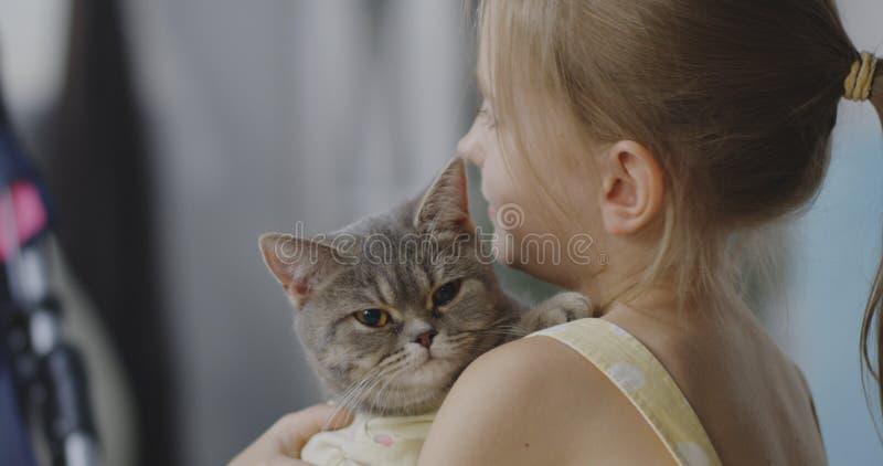 Katten som ligger på flickor, knuffar royaltyfri bild