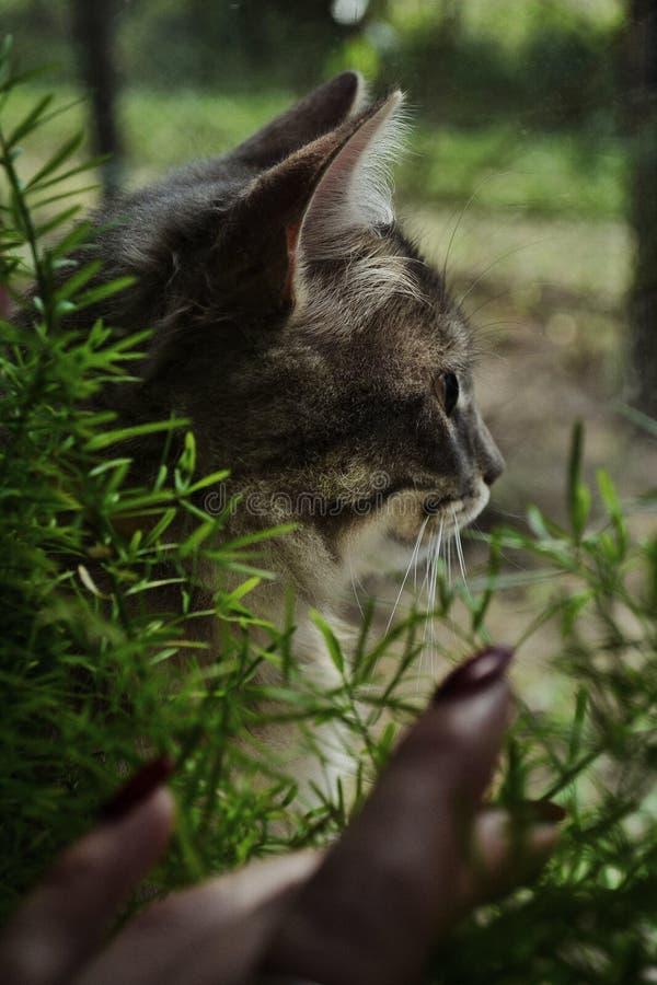 Katten som ser ut ur fönstret royaltyfri foto