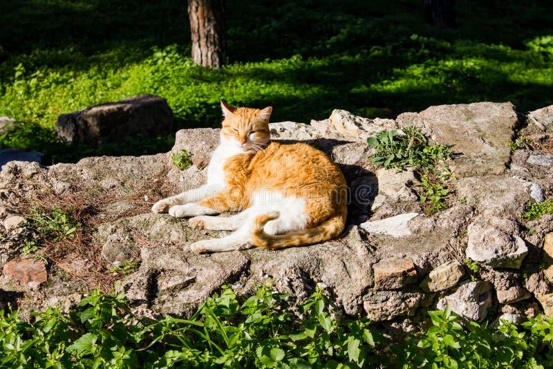 Katten som sitter i solen på, fördärvar av Aten arkivfoto