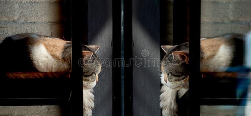 Katten sover framme av ett fönster och ser på hennes reflexion i spegeln royaltyfri bild