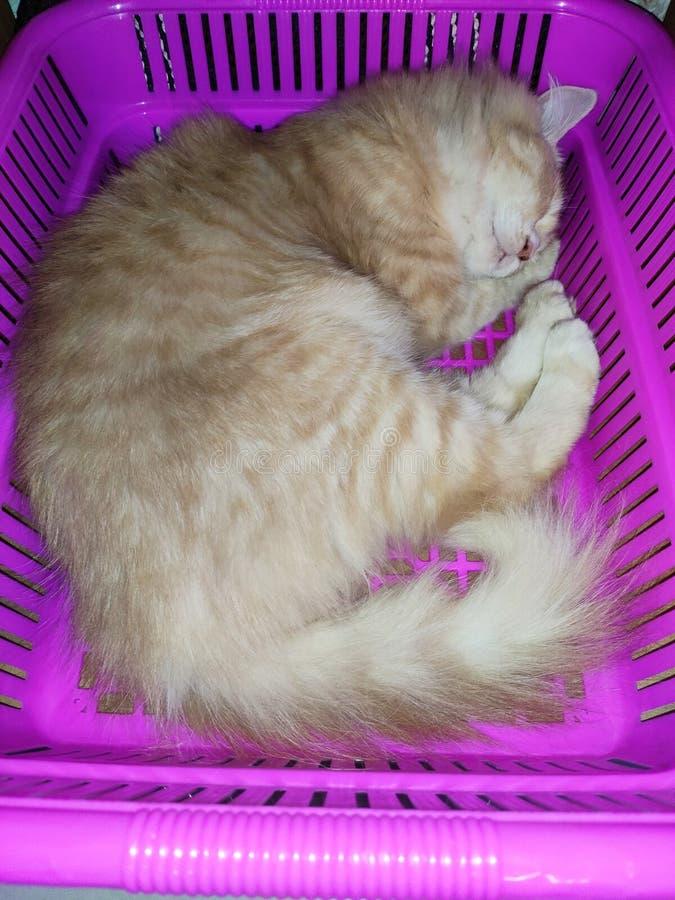 Katten sover i korg royaltyfri bild