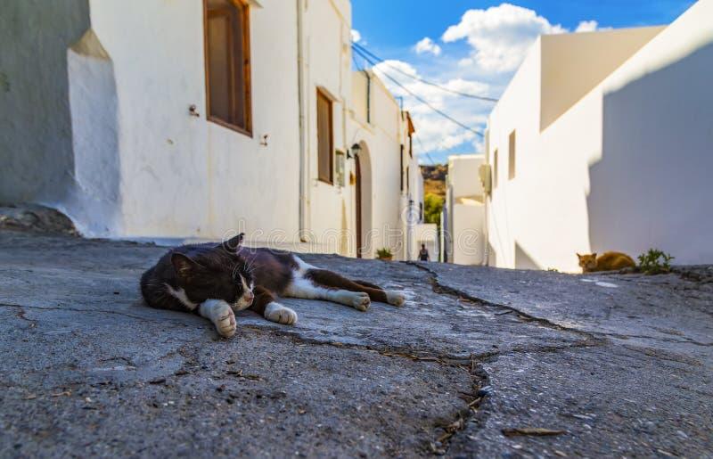 katten sover i mitt av vandringsledet av den turist- staden av Lindos, Rhodes, Grekland Varm värme, sol med moln, djup av fältet royaltyfri fotografi