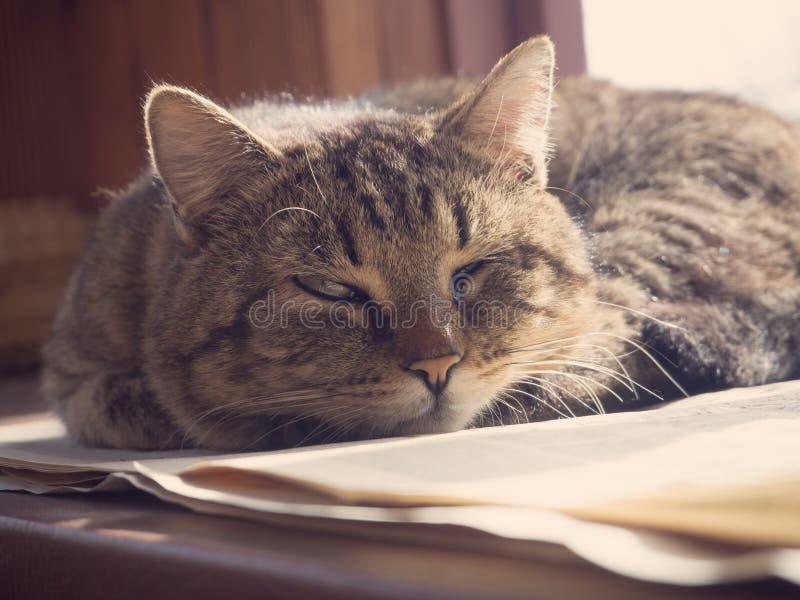 Katten sover på fönstret royaltyfria foton