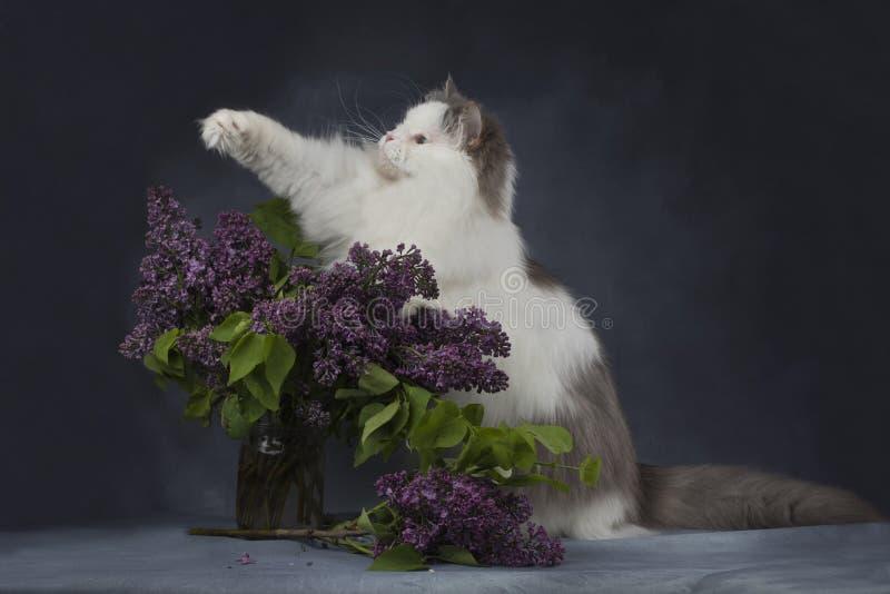 Katten spelar med en bukett av lilor royaltyfria foton