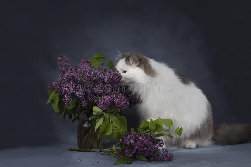 Katten spelar med en bukett av lilor arkivbild