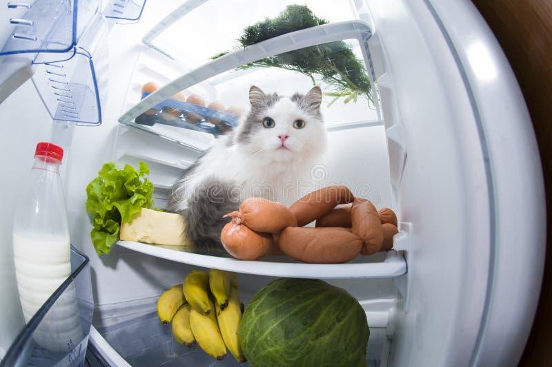 Katten stjäler korven från kylskåpet arkivfoton