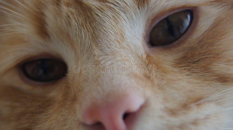 Katten suckar royaltyfria foton