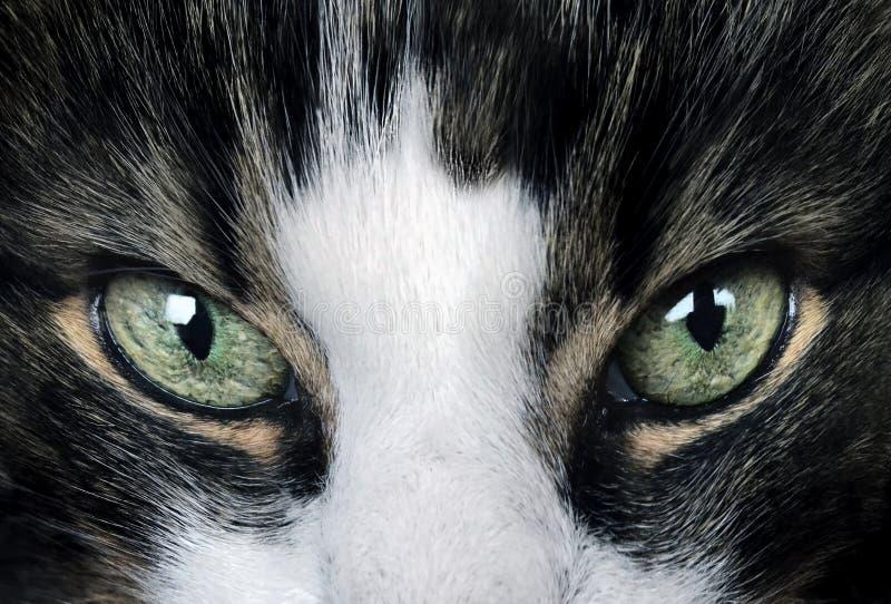 Katten synar royaltyfria bilder
