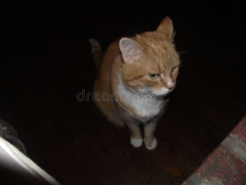 Katten tänker royaltyfri foto