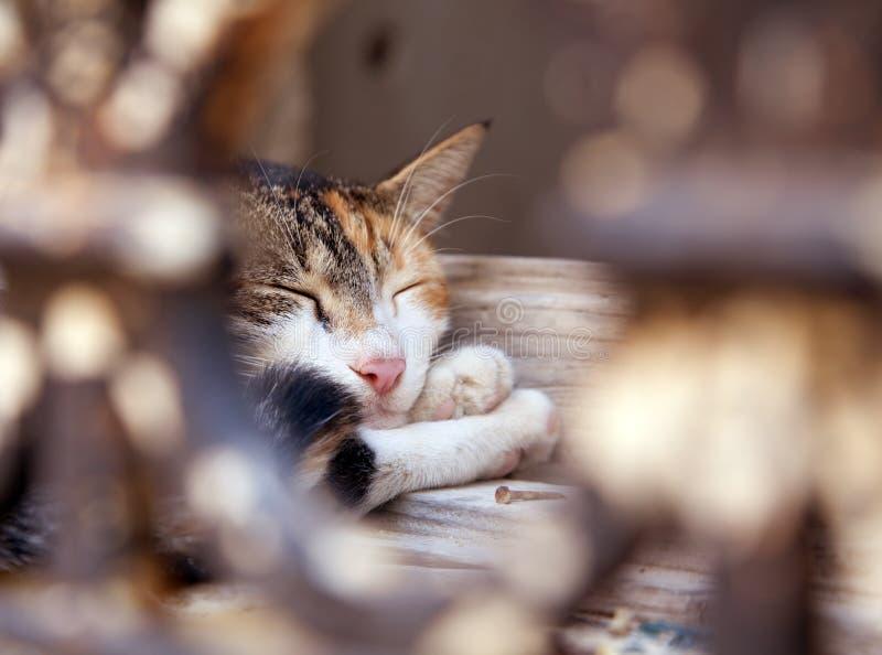 katten ta sig en tupplur fotografering för bildbyråer