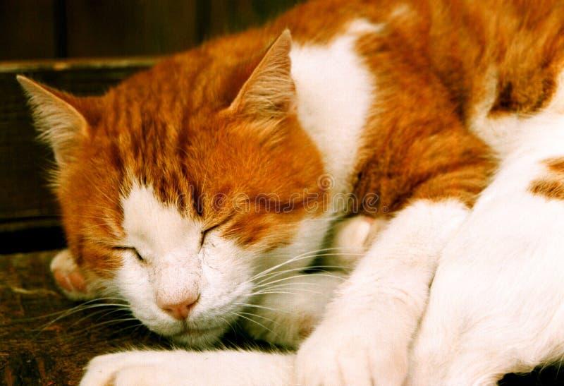 katten ta sig en tupplur royaltyfri foto