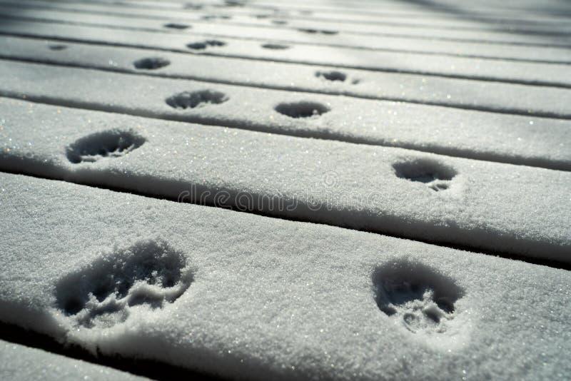 Katten tafsar tryck i snön arkivfoto