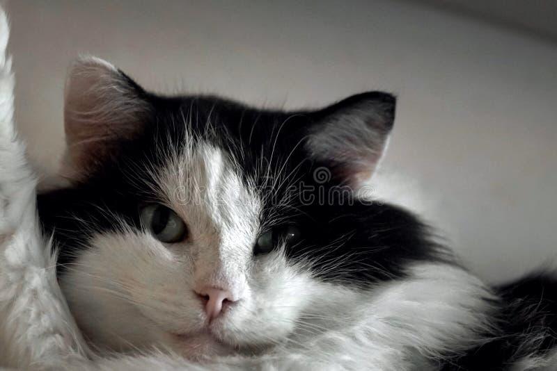 Katten tar en selfie royaltyfria foton