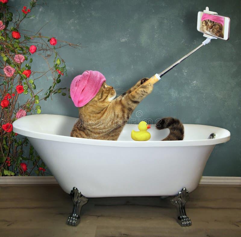 Katten tar ett bad arkivfoton