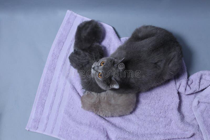 Katten tar omsorg av kattungar royaltyfria bilder