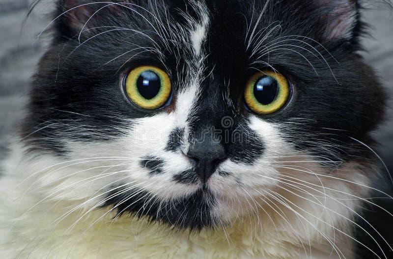 Katten tystar ned svart kattwhite royaltyfri fotografi