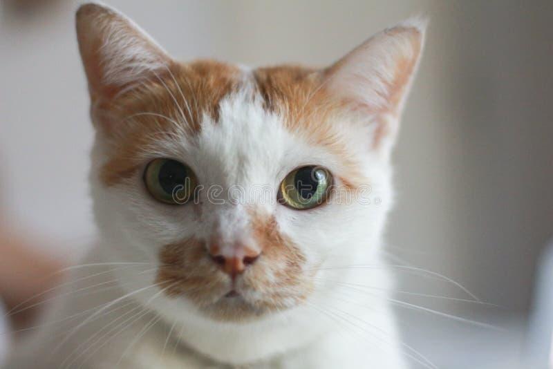 Katten vänder mot arkivfoton